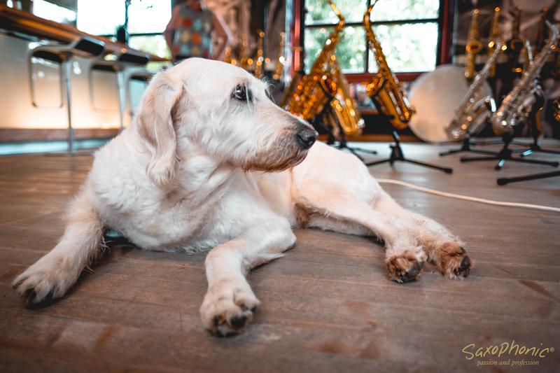 Hunde und Saxophon Musik